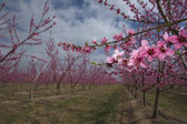 Fruit Trees a cloudy day — Zdjęcie stockowe