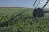 Center pivot irrigation — Stock Photo