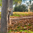 Squirrel and autumn — Stock Photo