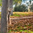 Squirrel and autumn — Stockfoto