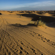 Erg Chebbi tracks — Stock Photo