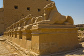 Sphinx avenue in Karnak Temple — Stock Photo