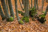 Green feets — Stockfoto