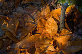 Dry leaves sun ray — Stockfoto