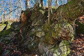 Wood and rock — Stockfoto