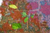 Floating leaves in Cordoba — Stock Photo