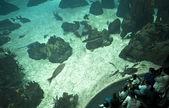 Sitting on aquarium — Stock Photo