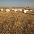 Harvested grass field with wrapped bales — Foto de Stock