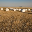 Harvested grass field with wrapped bales — Stok fotoğraf