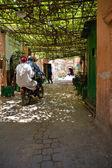 Eğitimli sarmaşık sokak — Stok fotoğraf