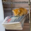 Foto Stock: Paperweight cat