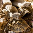 Stock Photo: Reptiles for sell