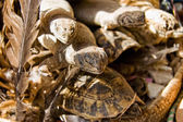 Reptiles for sell — Stockfoto