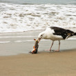 Coney Island hungry seagull — Stock Photo #40792423