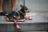 赤いブーツ — ストック写真