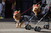 Dog parade — Stock Photo