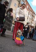 Dog bullfighter — Stock Photo