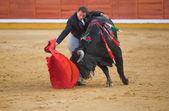 Hug the bull — Zdjęcie stockowe