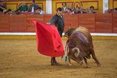 Spanish Bullfighter with the muleta  — Stock Photo