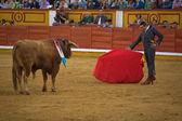 Corrida Bullfighting — Stock Photo