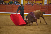 Spanish bullfighter  — Stock Photo
