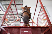 Horse head in manege box — Stockfoto