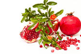 Pomegranate green branch — Stock Photo