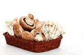 美味蘑菇 — 图库照片