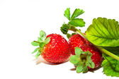 Luscious strawberries — Stock Photo