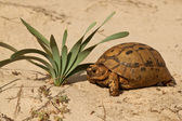 Turtle in nature — Stock Photo