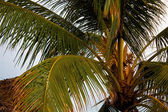 Palm leaves pattern — Stock Photo