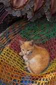 Red kitten for sale in a basket at Chichicastenango market Guatemala — Stock Photo