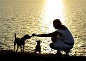 Woman and dogs Silhouette summer beach sunset at the sea playing together — Stock Photo
