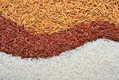 Reis-Korn — Stockfoto