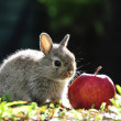 Rabbit bunny — Stock Photo