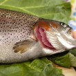 Recognize fresh trout — Stock Photo