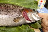 Recognize fresh trout — Stock Photo
