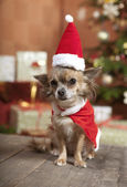 Christmas dog sitting — Stockfoto