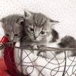 Cat babies — Stock Photo