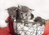 Cat babies — Stock Photo