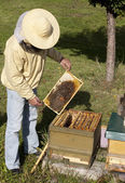 Beekeeper from Germany — Stockfoto