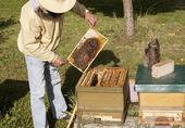 德国养蜂 — 图库照片