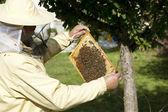 Beekeeper inspected hive — Stock Photo