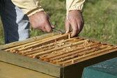 Honeycomb boxes — Stock Photo
