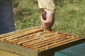 Control of the bee hive — Stock Photo