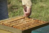 Control de la colmena de la abeja — Foto de Stock