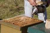 пчеловод с курильщика — Стоковое фото