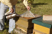 Beekeeper with open hive — Stock Photo