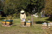 Beekeeper with hive — Stockfoto