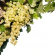 Vine with grapes on white background — Stock Photo
